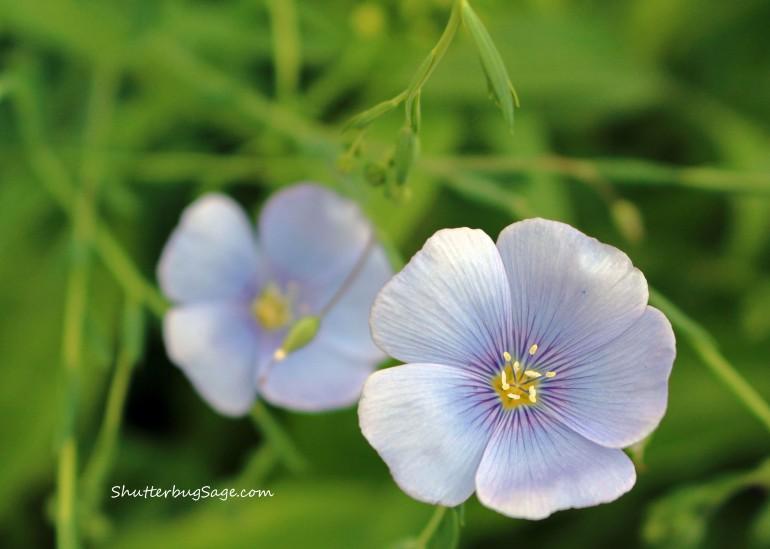 Small Purple Flowers 1_edited-1