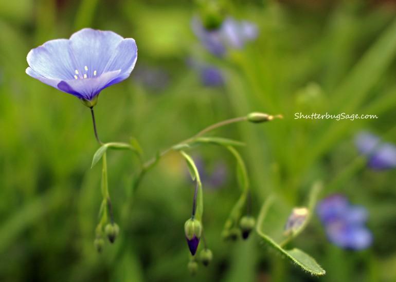 Small Purple Flowers 2_edited-1