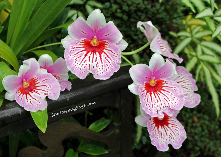 Pink Orchids_edited-1