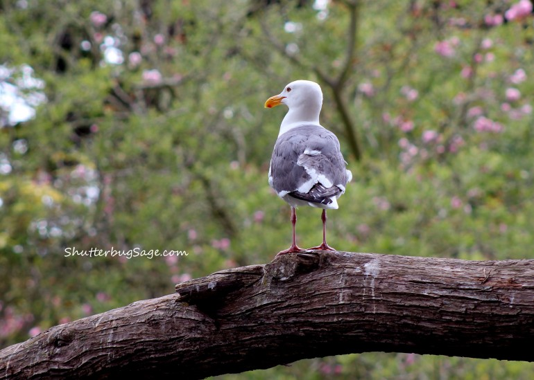 Seagull 2_edited-1