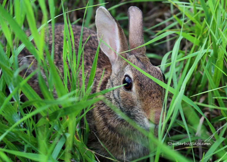 Wild Rabbit_edited-1