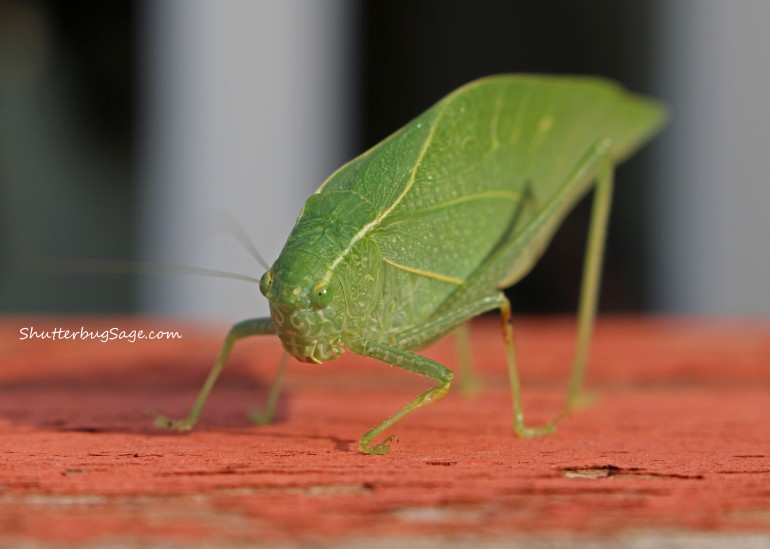 Leaf Bug_edited-1