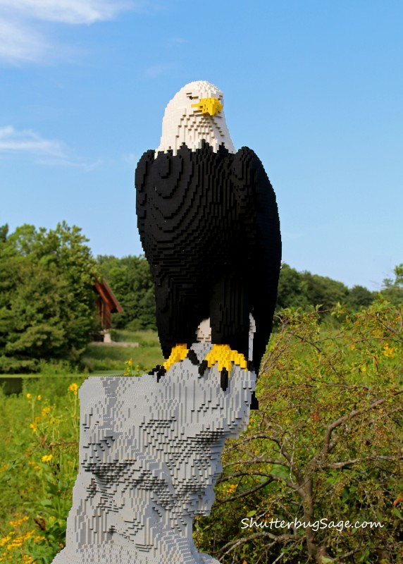 Lego - Bald Eagle_edited-1