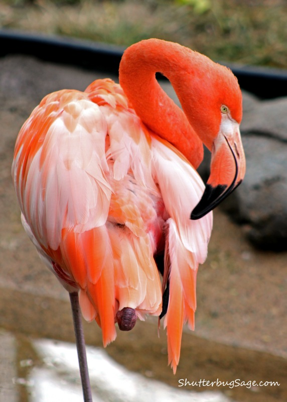 Flamingo_edited-1