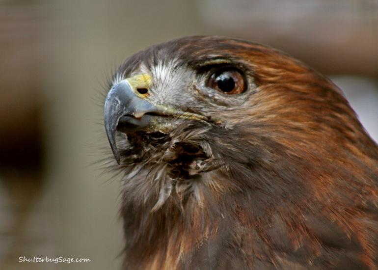 Hawk 3_edited-1
