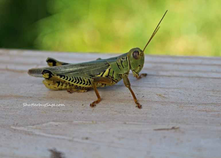 Jiminy Cricket_edited-1