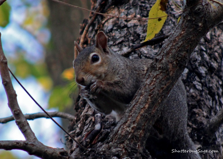 Squirrel_edited-1