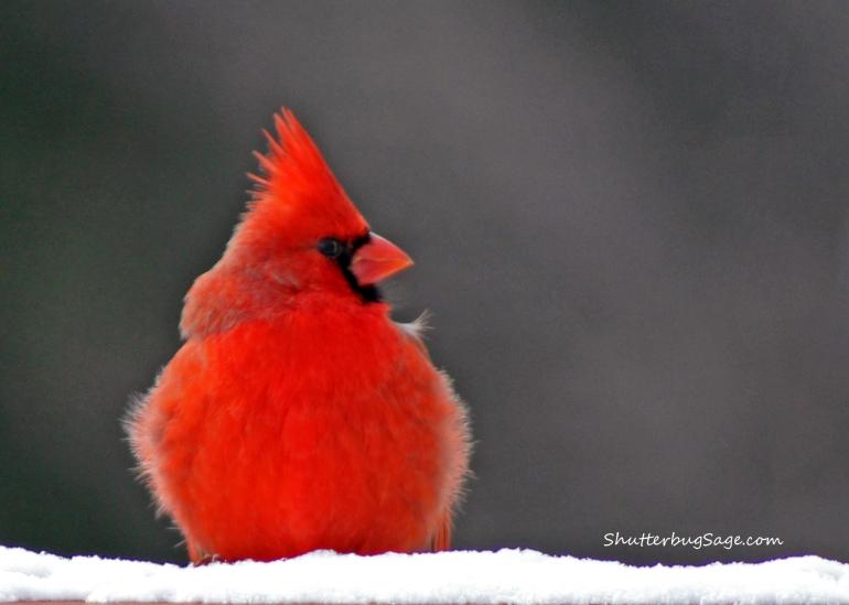 Cardinal 3_edited-1