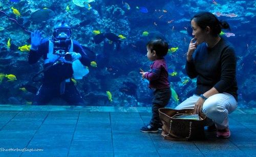 Georgia Aquarium - A boy is mesmerized by a diver at the Georgia Aquarium