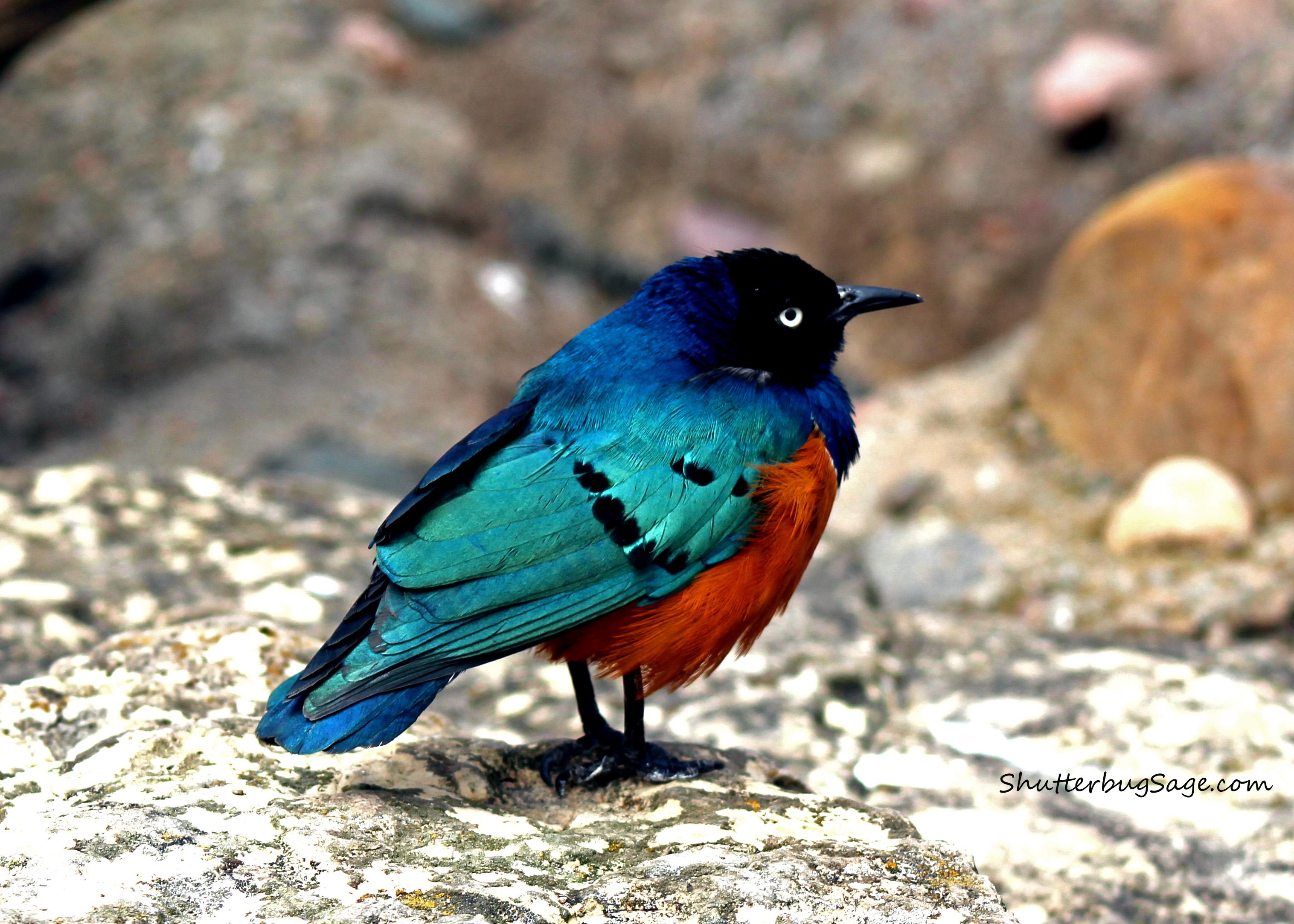 kansas city zoo birds shutterbugsage com