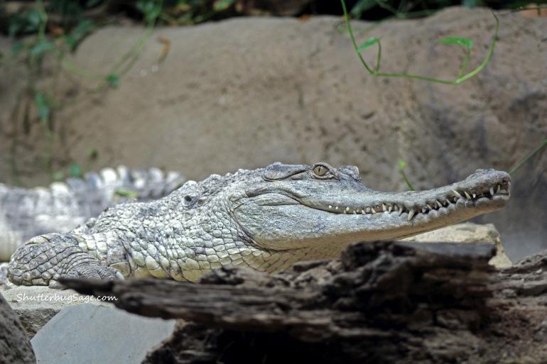 Croc 2_edited-1