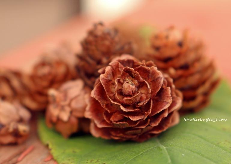 Mini Pinecones_edited-1