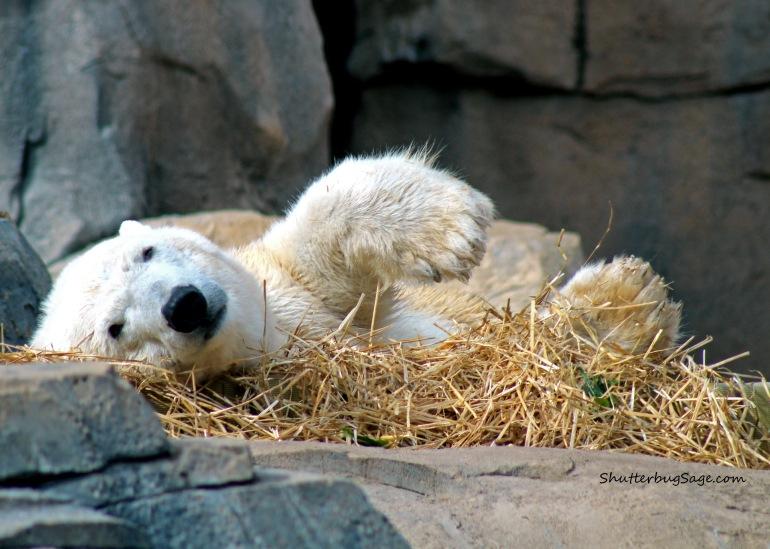 Polar Bear 1_edited-1