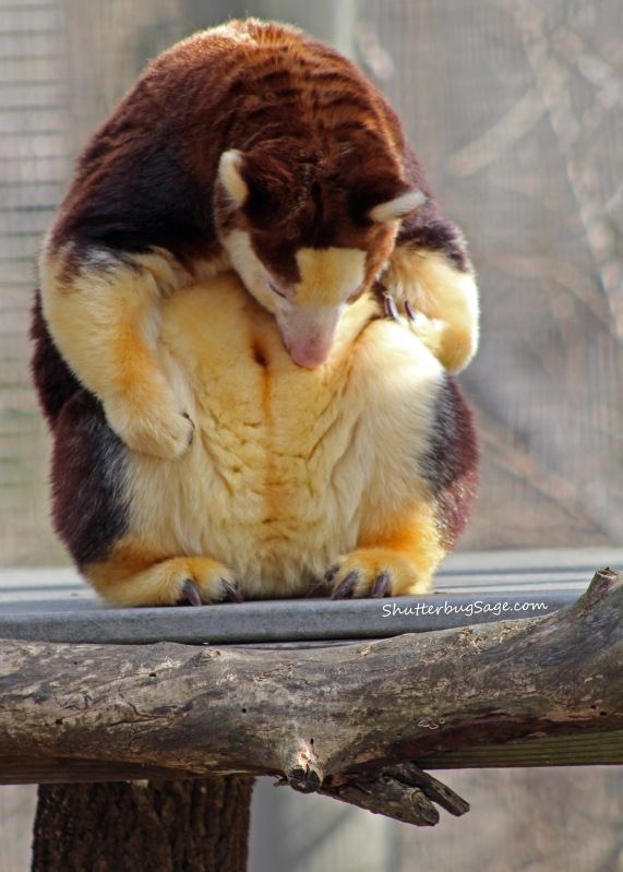 Tree Kangaroo 2_edited-1