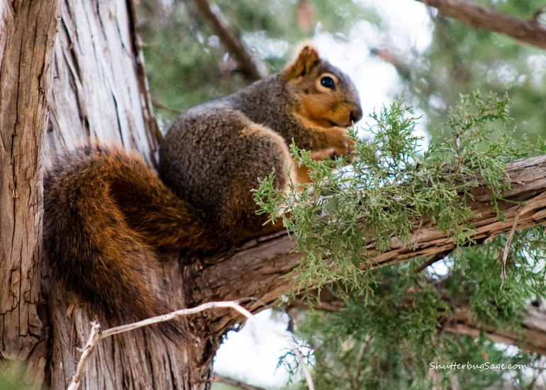 Sunset Zoo in Manhattan, Kansas -  Squirrel