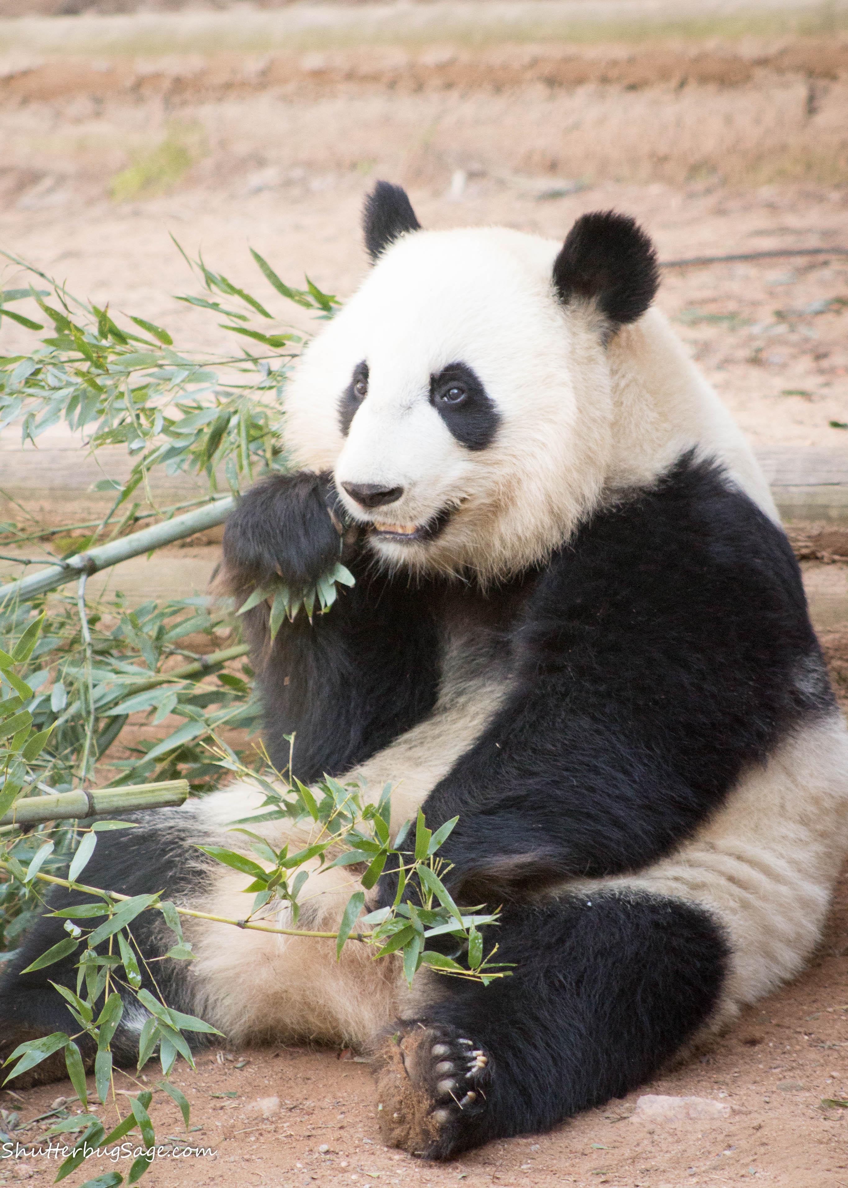 Panda Bear Fast Food