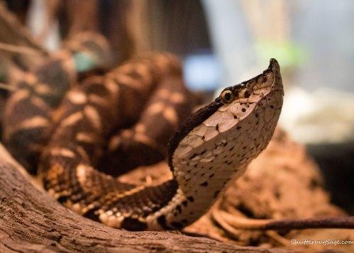 Zoo Atlanta - Snake